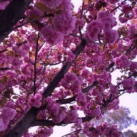Almost springtime in San Francisco 2016