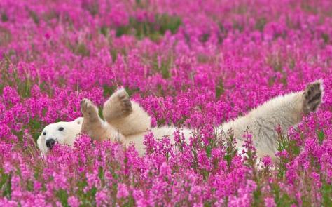 JOURNEYS0915-canada-bear