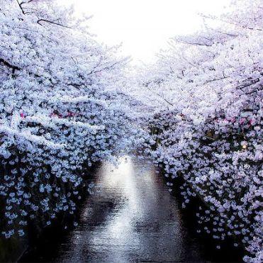 Hirosaki Castle botanic garden, Japan
