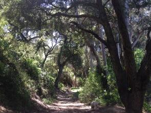 Wilacre-Park-Betty-B.-Dearing-Trail