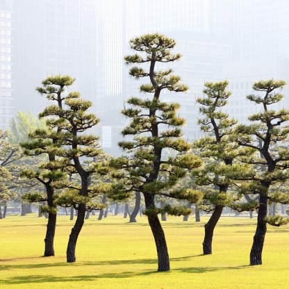 imperial-palace-tokyo-GettyImages-532797987