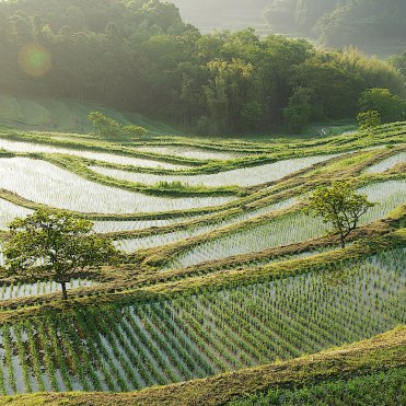 oyama-rice-terraces-GettyImages-459763841