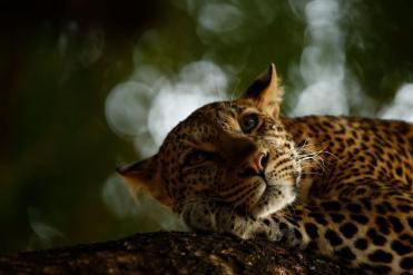 02-wildlife-photo-year-skye-meaker---wildlife-photographer-of-the-year.adapt.1190.1