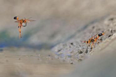 06-wildlife-photo-year-georgina-steytler---wildlife-photographer-of-the-year.adapt.1190.1