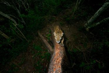 13-wildlife-photo-year-alejandro-prieto---wildlife-photographer-of-the-year.adapt.1900.1